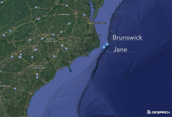 Two Young Great White Sharks Stop By The Outer Banks Beach 104
