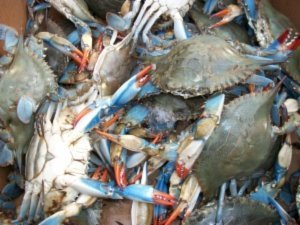 After owner pleads, Columbia seafood company admits to
